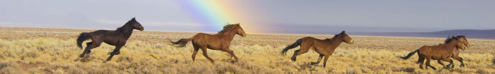 Horses running across a field with a rainbow in background