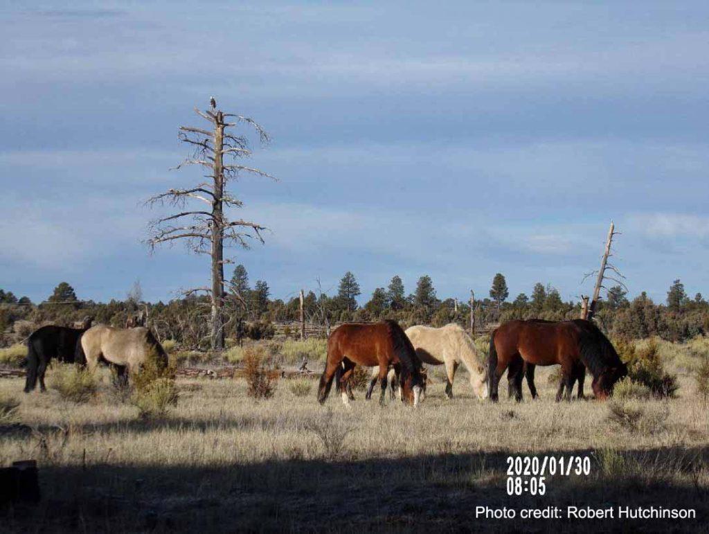 Heber Herd
